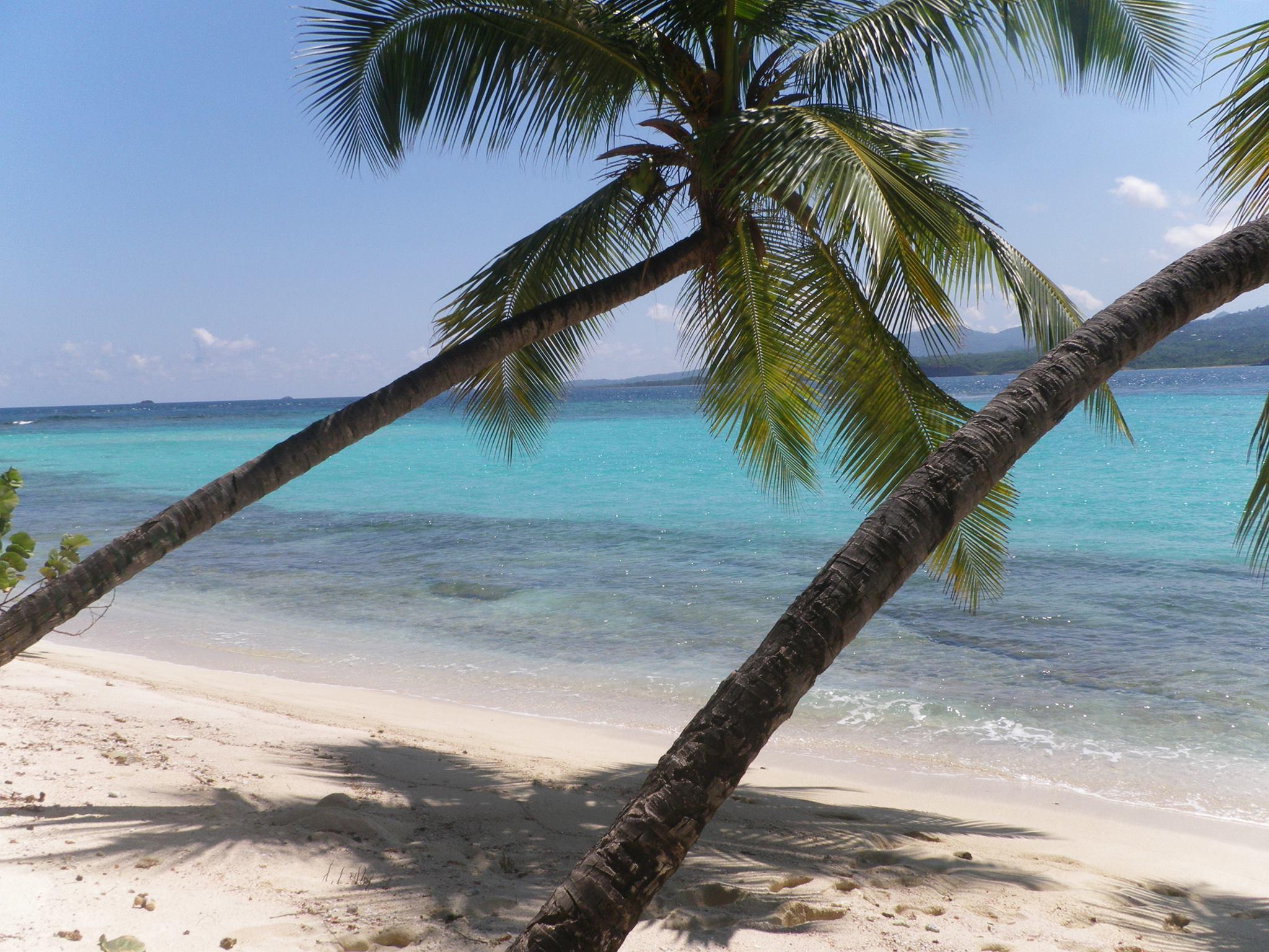 Sandy Island Palm Trees